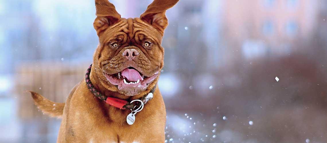 Ny webshop specialiserer sig i helse til kæledyrene